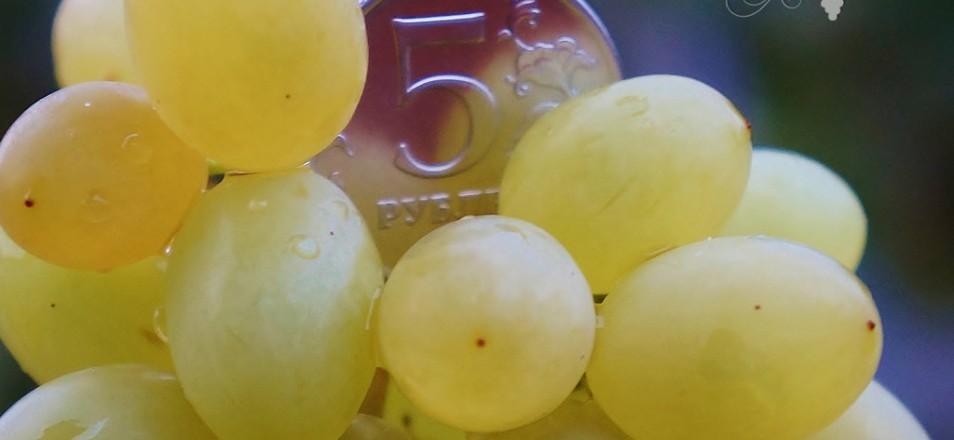 Сорт винограда Русбол улучшенный описание, фото